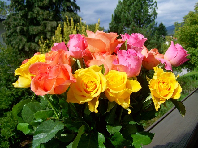 Pink, yellow, and orange roses